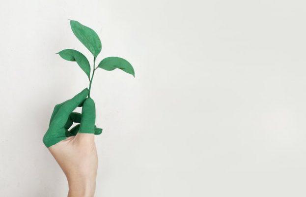 mano con planta responsabilidad social corporativa